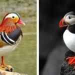 30 самых красивых птиц в мире