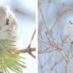 7 невероятно милых животных с острова Хоккайдо в Японии