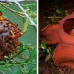 Самые необычные и жуткие растения нашей планеты