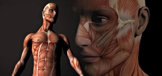 Удивительные и интересные факты о человеческом теле