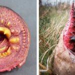 Жуткая и пугающая природа: 30 фото, которые докажут, что природа страшна как ад
