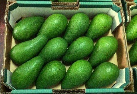 Набеги на плантации авокадо
