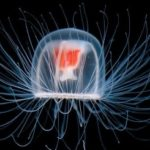 10 удивительных организмов, которые живут невероятно долго