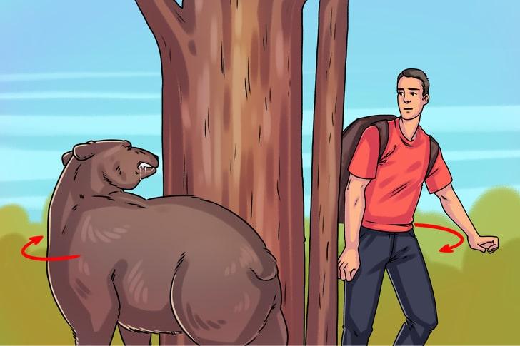 Встреча с агрессивным медведем