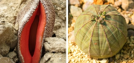 12 самых странных и интересных растений и грибов в мире