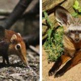 13 животных, о которых вы даже не слышали