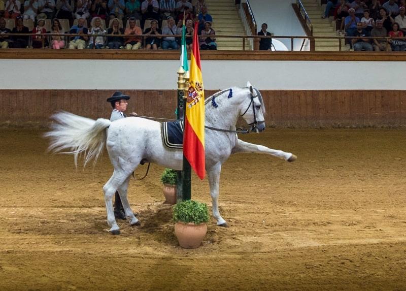 танцующие лошади