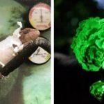 15 редких фотографий, показывающих чудеса природы