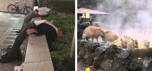 18 фотографий, которые показывают, почему так трудно понять Японию