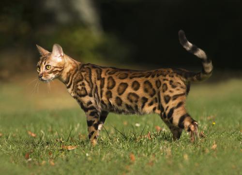 Кошечка по имени Катон