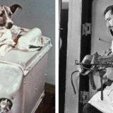 Лайка и первые животные в космосе