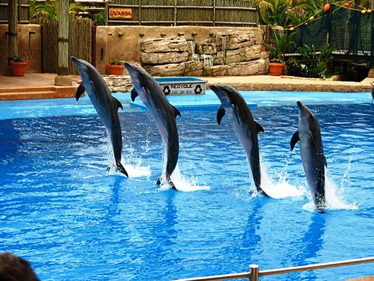 Мальтийский дельфинарий