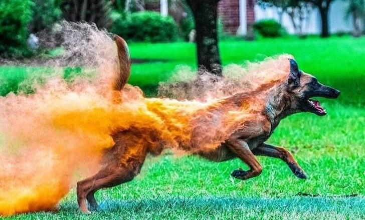 Пес покрыт краской холи