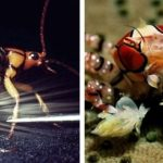 12 невероятных механизмов самообороны у животных