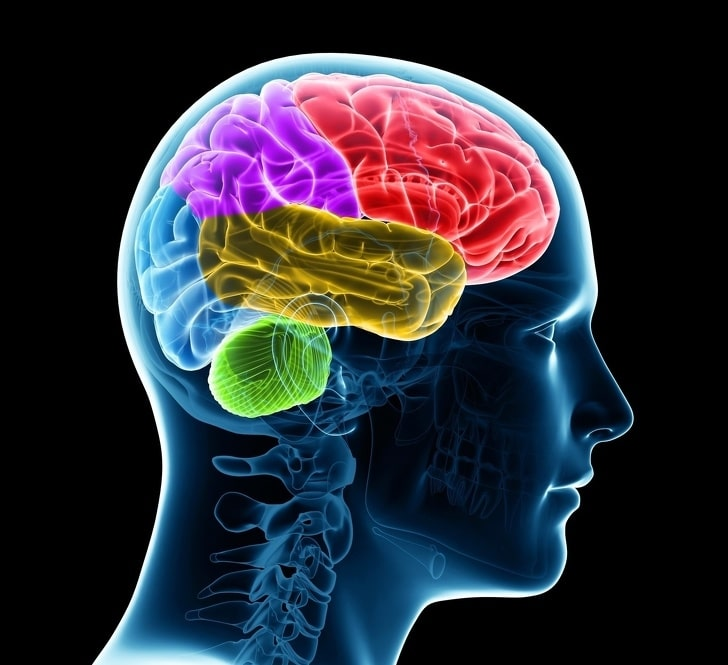 Изучение нового языка омолаживает мозг