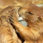 Как общаются животные: 10 удивительных фактов о языке животных