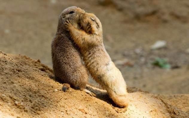 Как общаются животные