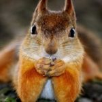 10 самых умных животных нашей планеты