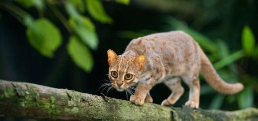 18 фото ржавых кошек