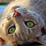 Интересные факты о кошках, которые вы, возможно, не знали