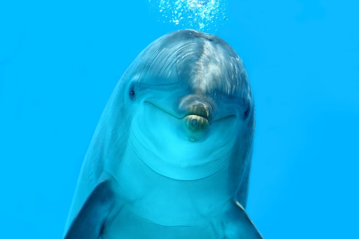 Дельфины специально едят токсичную рыбу фугу