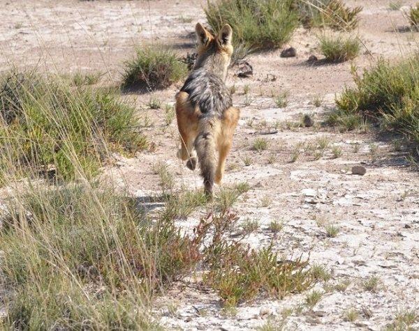 Путь, по которому убежала собака