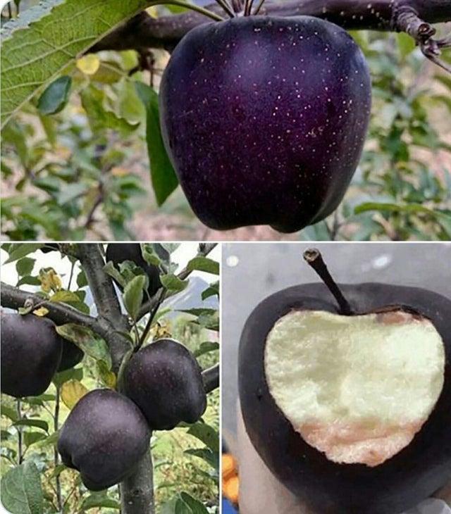 черное алмазное яблоко