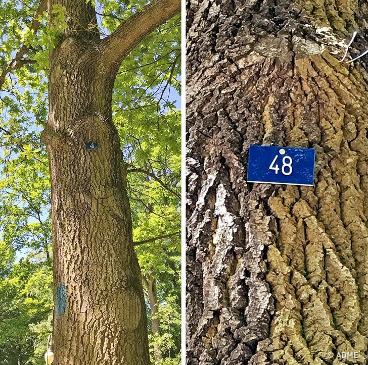 ВГермании нумеруют деревья