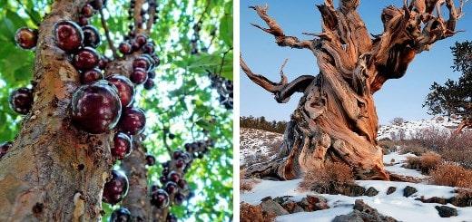 15 поразительных фактов о деревьях