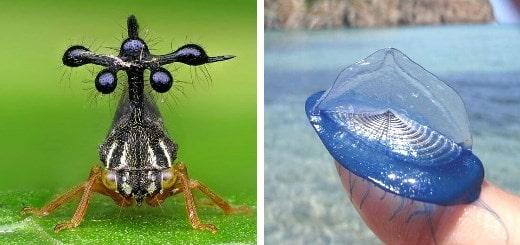 20+ необычных животных, которые кажутся пришельцами