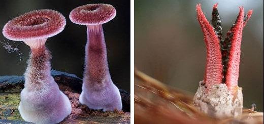 30+ фотографий самых красивых грибов в мире