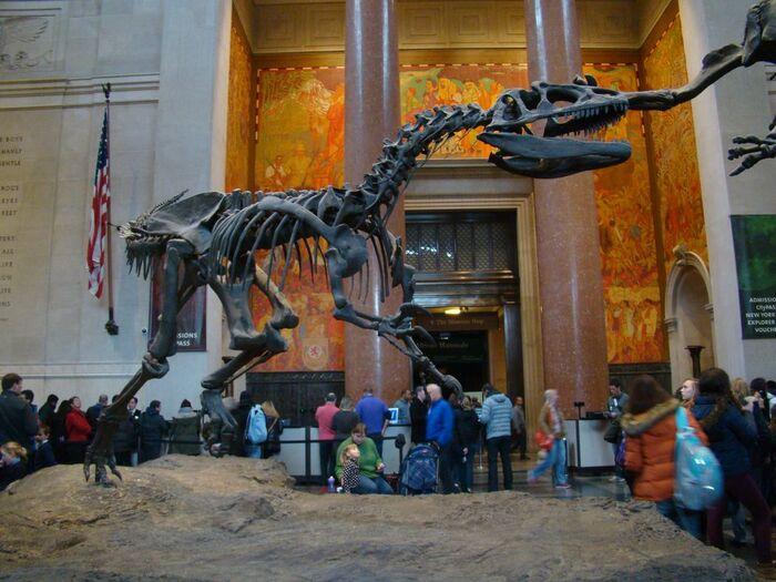 Американский музей естественной истории в Нью-Йорке