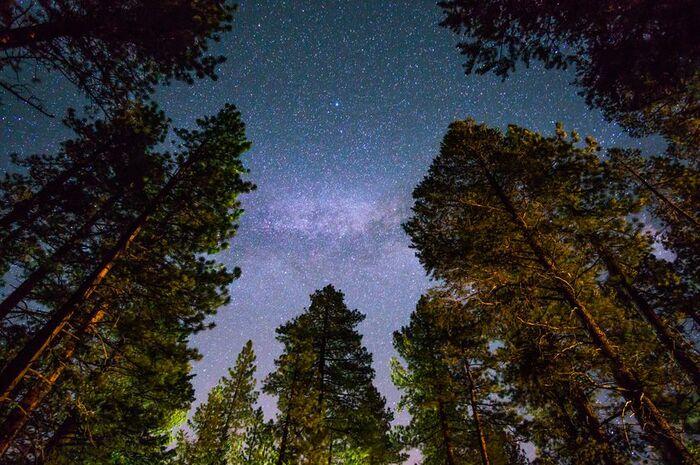 Деревья в Национальном парке Редвуд