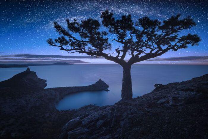 Млечный путь сияет над сосной