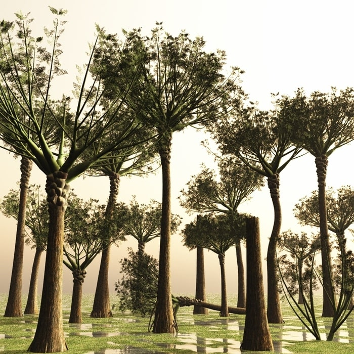 Ваттиеза (Wattieza) — самое первое на Земле лесное дерево