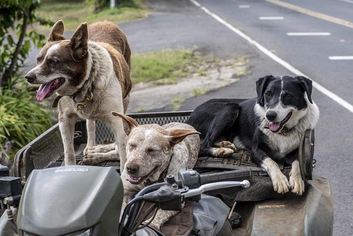 мифов о собаках