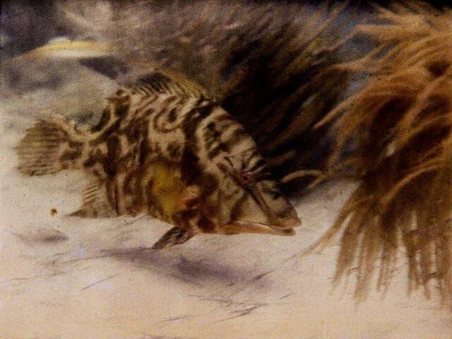 Первое подводное цветное фото - 1926