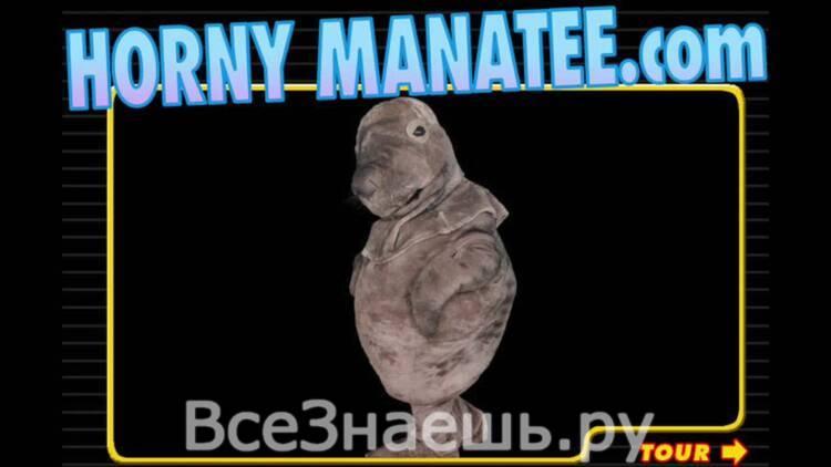 hornymanatee
