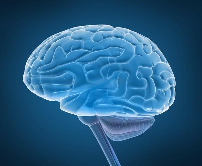 Человек использует только 10% мозга