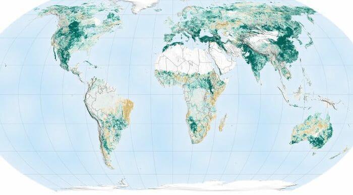 Карта озеленения планеты