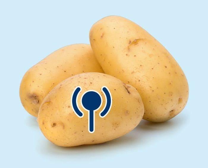 Картофель поглощает сигнал беспроводного интернета