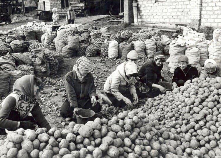 Работа на овощной базе