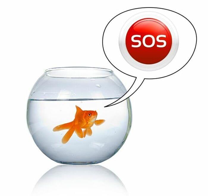 Рыбок нельзя держать в круглом аквариуме