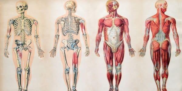 Биология для детей: Человеческое тело