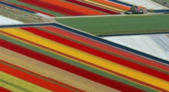 Поля тюльпанов - Лиссе, Нидерланды