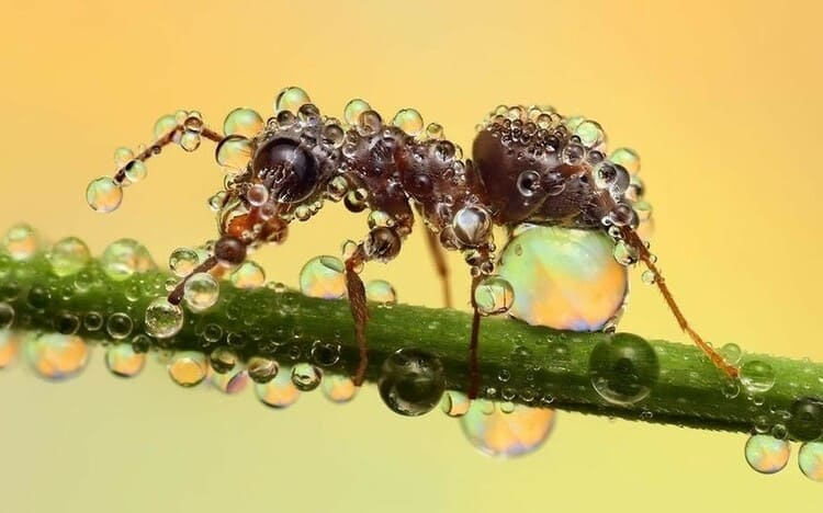 насекомые способны разговаривать и выполнять простейшие арифметические действия