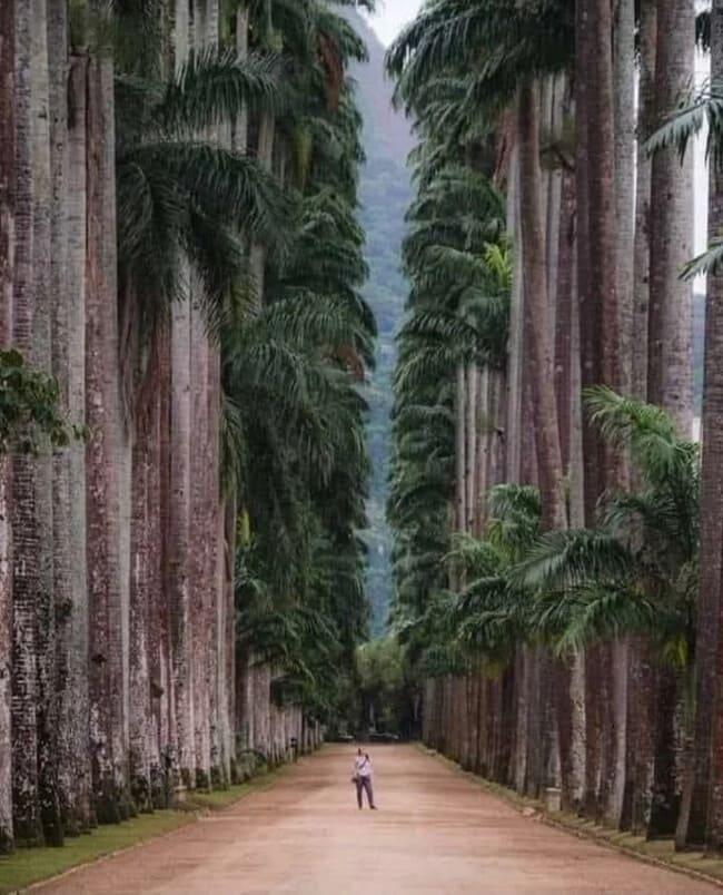 Ботанический парк в Рио-де-Жанейро
