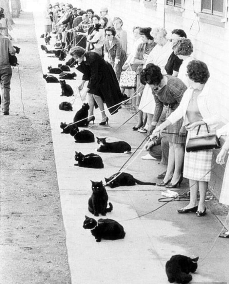 Кастинг черных котов