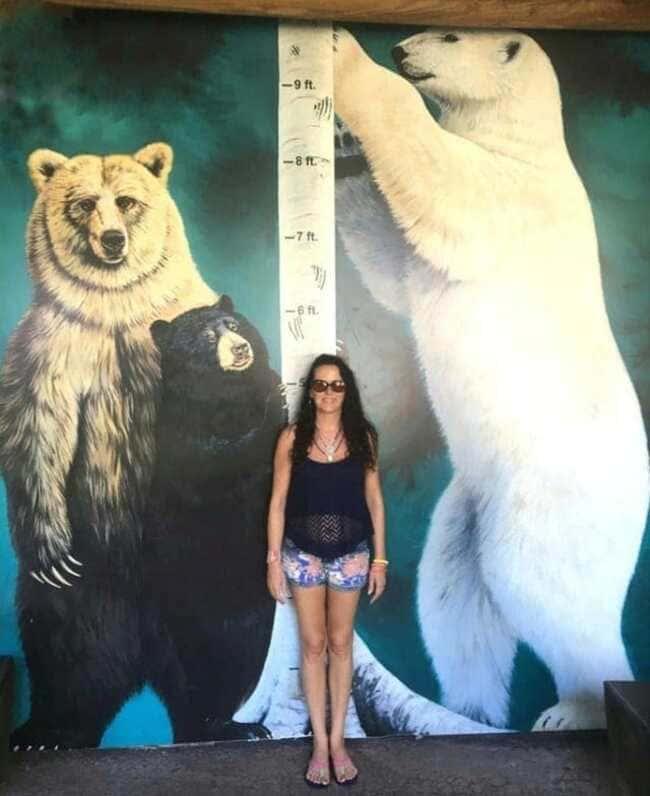 Реальный размер разных медведей по сравнению с человеком