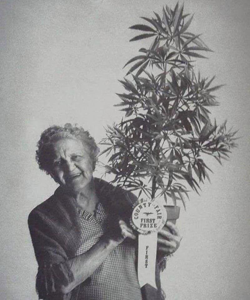 Счастливая бабушка с лучшей марихуаной